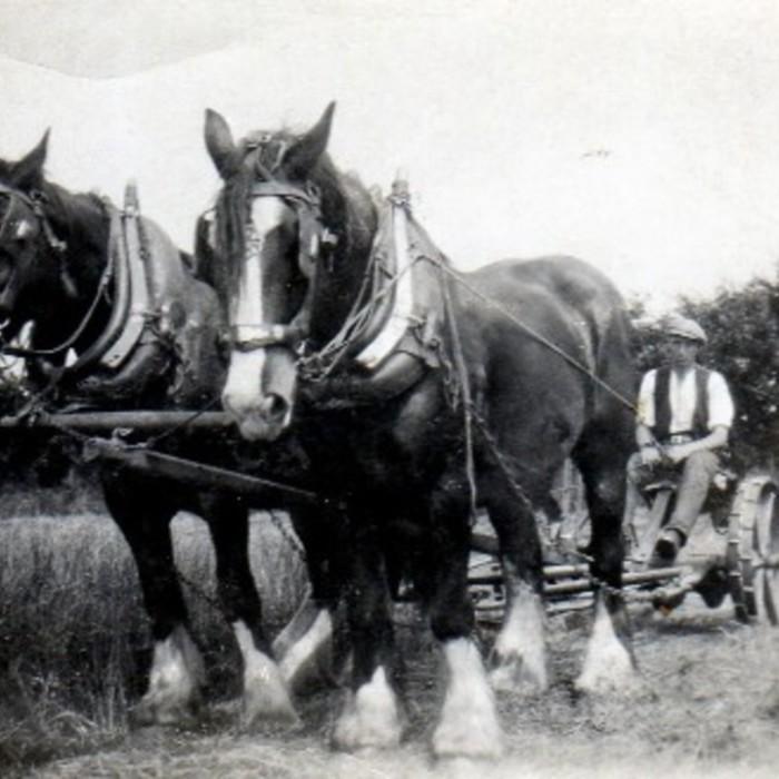 Jimmy Payne  and Horse Team.jpg