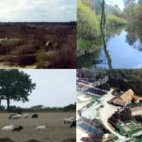 Cawston Heath.jpg